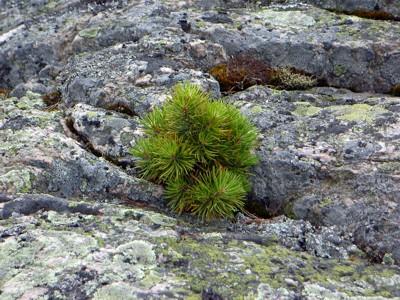 kleinste Felsspalten reichen der Natur