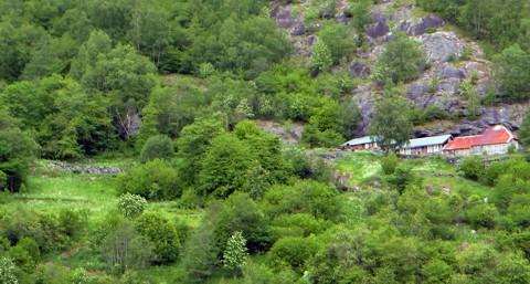 Bauernhöfe in den Fjorden