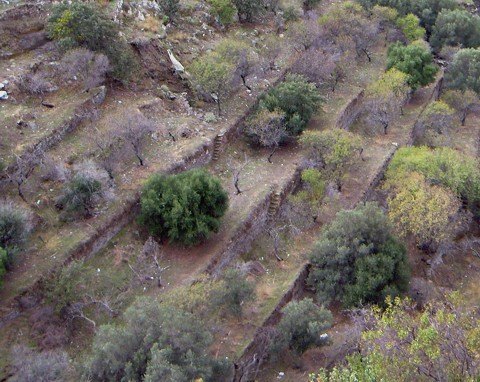 terrassenförmig angelegte Felder auf Kea