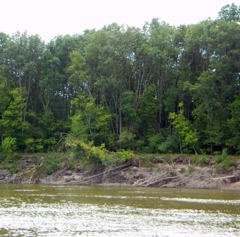 Donau - ganze Bäume im Wasser