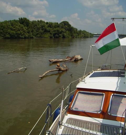 Treibholz auf der Donau