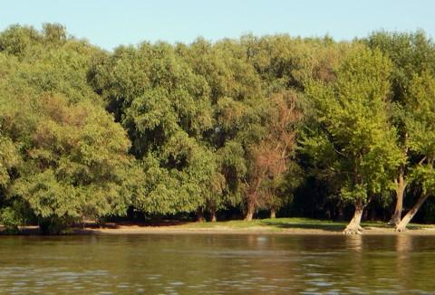 Donau - Beginn vom Delta
