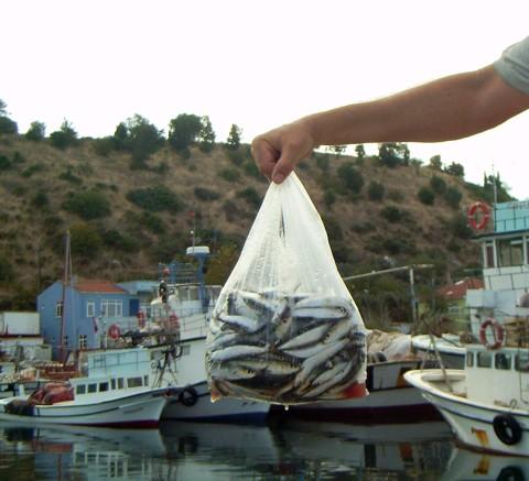 türkischer Fisch