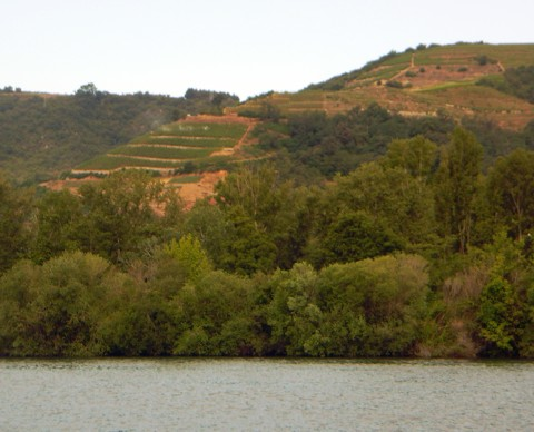 Weinhänge - Rhone