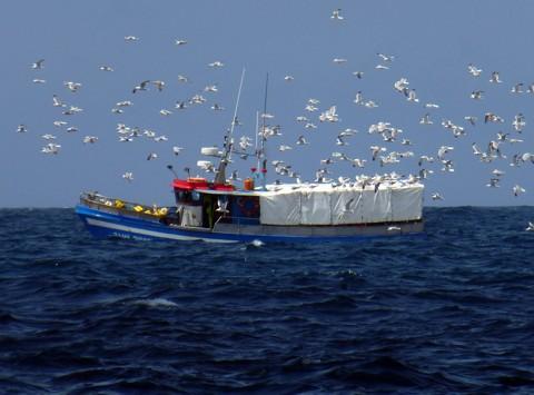 Fischer mit Möwen
