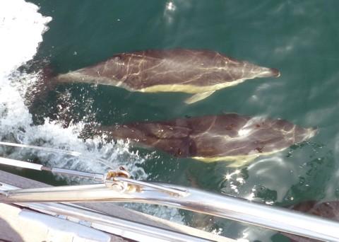 Delphine - beim Segeln