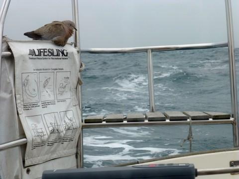 Gast an Bord