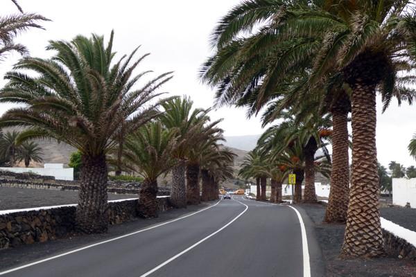 Palmen-Alleenstraße
