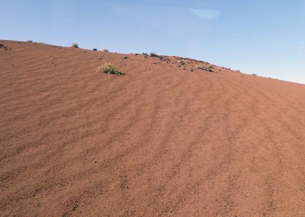 Timanfaya Vegetation