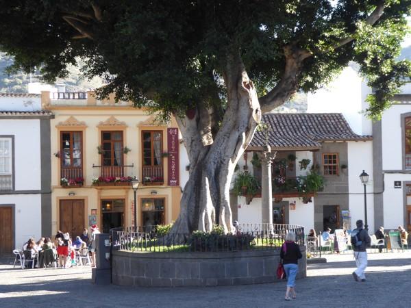 Teror, Plaza del Pino, Lorbeer