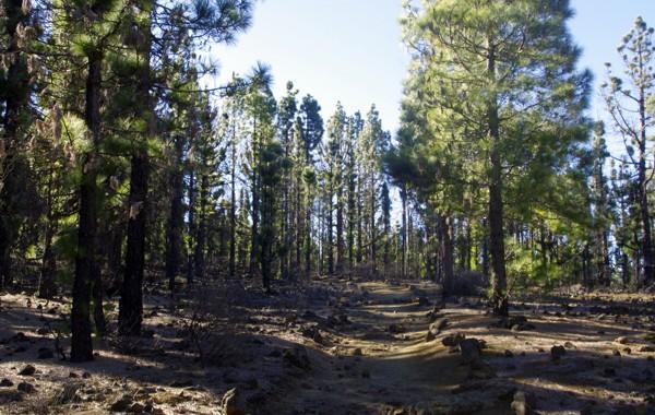 Wald La Palma
