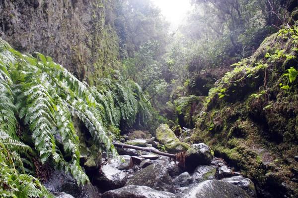 Wandern La Palma