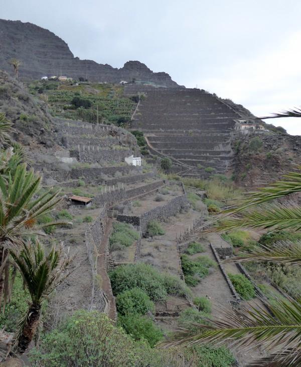 Terrassenfelder - La Gomera