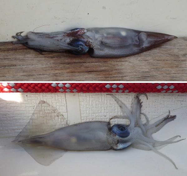 Tintenfische an Bord