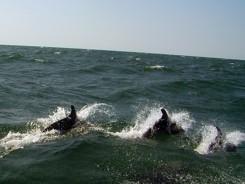 Segeln Schwarzes Meer